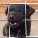 kennel puppy