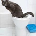 pet-cat-peeing12_30